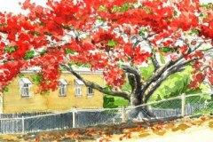 blaze of festive colour