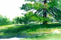 sentinel pine in centennial park